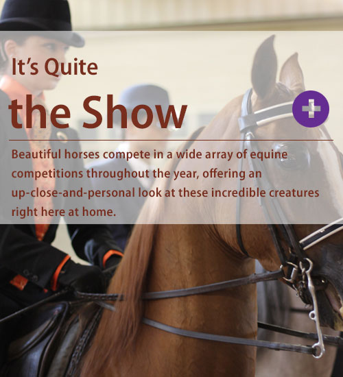 Equine Shows